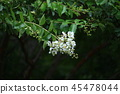 Mountain forest flower 45478044