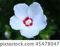 White flower 45478047