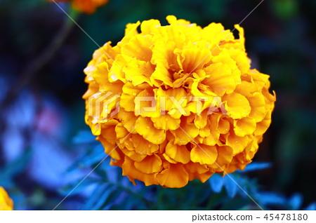 黃色的花朵 45478180