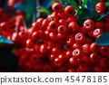 Crow berry 45478185