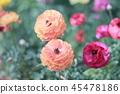 Bright flowers 45478186
