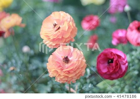 鮮豔的花朵 45478186