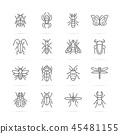 insect vector line icons 45481155