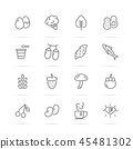 superfood vector line icons 45481302