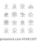 树木 树 矢量 45481307