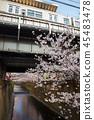 目黑区河 樱花 樱桃树 45483478