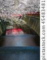 目黑区河 樱花 樱桃树 45483481