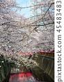 目黑区河 樱花 樱桃树 45483483