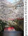 目黑区河 樱花 樱桃树 45483485