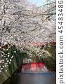 目黑区河 樱花 樱桃树 45483486