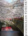 目黑区河 樱花 樱桃树 45483487