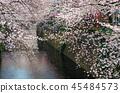 目黑区河 樱花 樱桃树 45484573