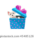 Maltese dog peeking out of blue gift box with pink bow. Adorable puppy. Flat vector element for 45485126