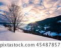 leafless lonely tree on a snowy slope at sunrise 45487857