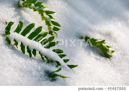 green fern leaves in snow 45487888