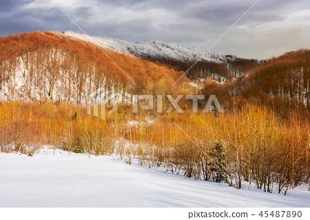 leafless beech forest in winter 45487890