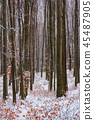 winter forest with some fall foliage in snow 45487905