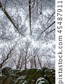 winter forest on a rocky cliff 45487911