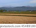 heap, mountain, autumn 45489180
