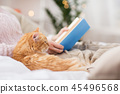 cat book christmas 45496568