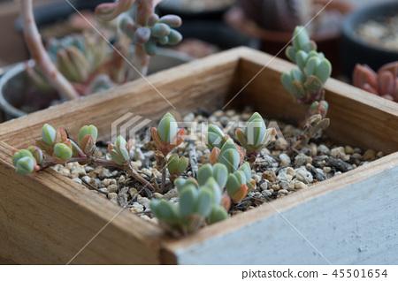 多汁植物 45501654