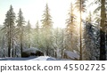 4K Aerial Snow Covered Trees  45502725