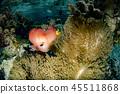 underwater, sea, ocean 45511868