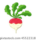 turnip cartoon icon design isolated on white 45522318