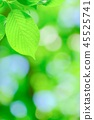 tender, green, verdure 45525741