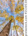 ป่าที่สวยงามกลางเดือนพฤศจิกายน 45530530