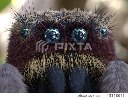 Salticus scenicus jumping spider macro 3d illustration 45538041