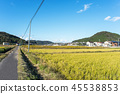 農村和住宅區 45538853