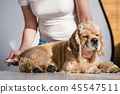 dog, pet, thermometer 45547511