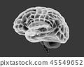 大腦 頭腦 x光 45549652
