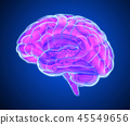 Brain scan illustration isolated on dark blue BG 45549656