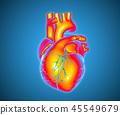Human heart illustration glowing on blue BG 45549679