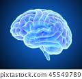 大腦 頭腦 x光 45549789