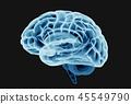 大腦 頭腦 x光 45549790