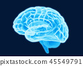 大腦 頭腦 x光 45549791
