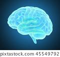 大腦 頭腦 x光 45549792