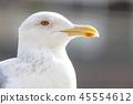 นกนางนวลพัก 45554612