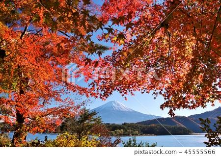 가을 단풍과 후지산 45555566