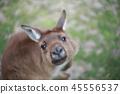 호주 자연 경치 아침 놀 태즈 메이 니아 코알라 캥거루 45556537