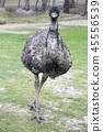 호주, 오스트레일리아, 광대 45556539