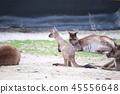 호주, 오스트레일리아, 해외 45556648