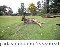 호주, 오스트레일리아, 해외 45556650