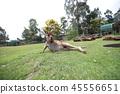 Australia Kangaroo Overseas Meerkat 45556651