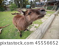 Australia Kangaroo Overseas Meerkat 45556652