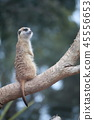 동물, 미어캣, 호주 45556653