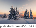 forest,mountain,snowy 45562433